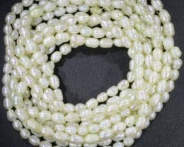 Five White Tip drill Oval Natural Pearl strand  GOGO 850