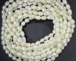 Five White Tip drill Oval Natural Pearl strand  GOGO 850