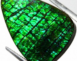 16.05 CTS AMMOLITE STONE FROM CANADA [STS323 ]SH