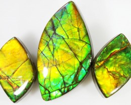 35.2 CTS AMMOLITE PARCEL PPP625