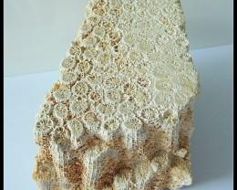 1290Ct Natural Coral Gemstone Specimens,Beautiful Coral Rough