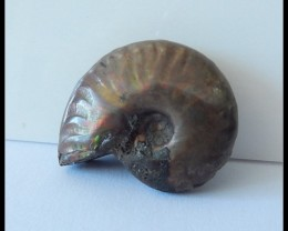 38Ct Natural Ammonite Gemstone