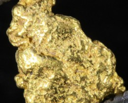 0.5 Grams  Kalgoorlie Gold Nugget, Australia LGN 1490