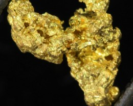 0.7 Grams  Kalgoorlie Gold Nugget, Australia LGN 1497