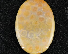 Genuine 37.10 Cts Oval Shaped Coral Fossil Untreated Cab
