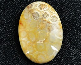 Genuine 36.05 Cts Untreated Coral Fossil Oval Shape Cab
