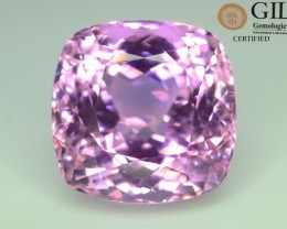 GiL Certified 59.18 ct Natural Kunzite from Afghanistan Hot Pink