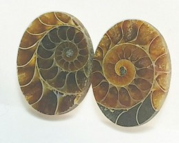 29mm Ammonite Pair oval shape