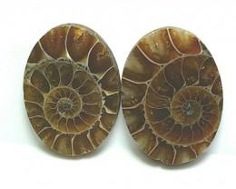 29mm pair matching Ammonite oval shape