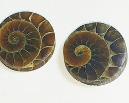 18mm Ammonite Pair round shape