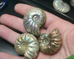 Ammonite Parcels