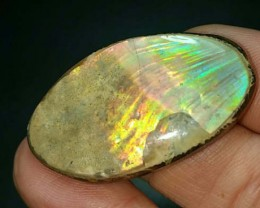 39mm Fire Ammonite or Iridescent Ammonite