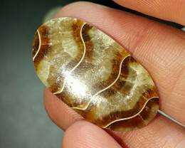30mm Ammonite designer cut cabochon from Madagascar 30 by 17 by 5mm