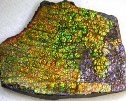 CANADIAN AMMOLITE PREFINISHED   175 CTS  TBG-2549