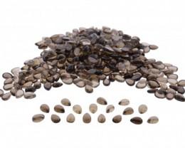 Smoky Quartz 728 cts 1210 stones 9x7mm Pear Cabochon