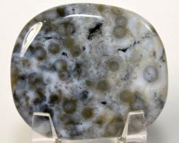 225ct Ocean Jasper Cabochon Orbicular Orbs Crystal Madagascar (STOJM-VV29)