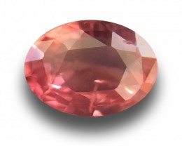 1.54 CTS | Natural Padparadscha |Certified | Loose Gemstone | Sri Lanka - N