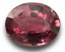 1.69 Carats | Natural Pinkish Orange Sapphire | Certified | Sri Lanka - New