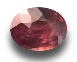 1.09 CTS Natural Unheated Brown Sapphire  Loose Gemstone Sri Lanka - New