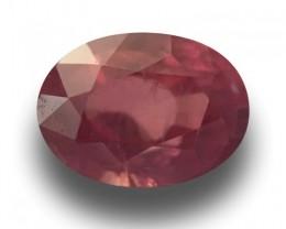 0.7 Carats | Natural Unheated Padparadscha | Loose Gemstone | Sri Lanka  -