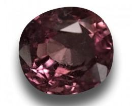 1.66 CTS |Natural Padparadscha | Loose Gemstone| Cretified|Sri Lanka - New