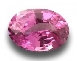 1.12 Carats| Natural  Pink Sapphire |Loose Gemstone|New|Srilanka