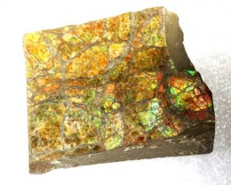 150.05CTS CANADIAN AMMOLITE PREFINISHED TBG-2555