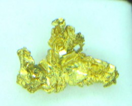2.7  grams of crystallized gold from Round Mountain gold mine Nevada USA