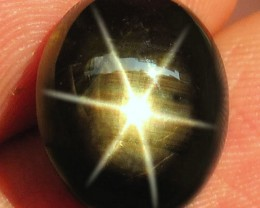 11.82 Carat Natural Thailnd Black Star Sapphire - Gorgeous