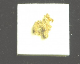 3.6 grams of crystalline gold from The Round Mountain Gold Mine Nevada USA