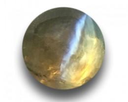 Natural Green Catseye |Loose Gemstone|New| Sri Lanka