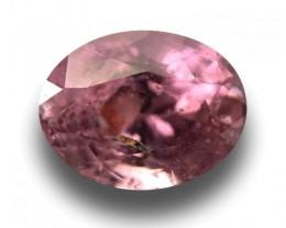 Natural Pink Sapphire|Loose Gemstone|Ceylon - NEW