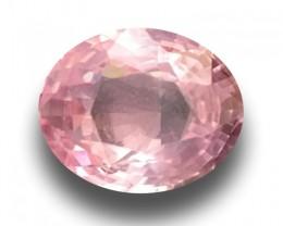 1.14 CTS | Natural Unheated Pink Sapphire |Loose Gemstone|New| Sri Lanka