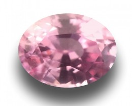 1.05CTS | Natural Unheated Pink sapphire|Loose Gemstone|Certified|Ceylon-NE