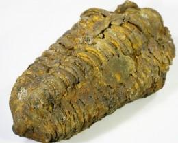 450cts C Trilobite  PPP 1972
