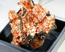 50Cts Nice Crocolite  on Gibbsite Specimen PL 1386