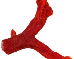 3.65 CTS RED  CORAL SPECIMEN FROM SPAIN[MGW5194]