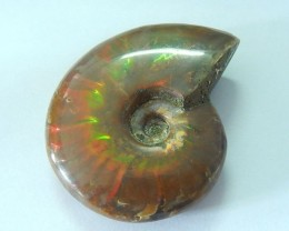 FREE SHIPPING! Sale Vintage 162.5ct 100% Natural Ammonite Fossil With Color
