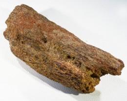 123.55Cts Moroccan Dinosaur Bones Fossil PPP1392