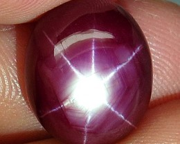 16.06 Carat Vibrant Ruby Star - Superb