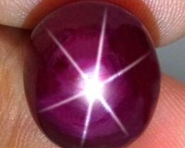 16.2 Carat Fiery Star Ruby - Superb