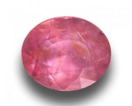 Natural Unheated Padparadscha Loose Gemstone  Sri Lanka - New