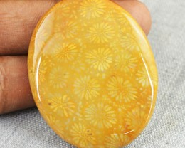 Genuine 66.50 Cts Coral Fossil Untreated Cab