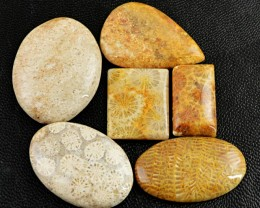 Genuine 135.50 Cts Coral Fossil Untreated Cab Lot