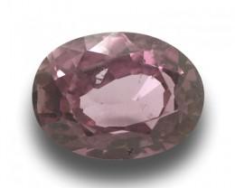1.70 Carats | Natural Unheated Pink Sapphire | Loose Gemstone | Sri Lanka C
