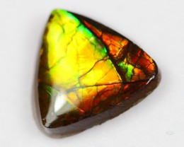 12x11mm Natural Rainbow Color Canadian Ammolite / Ammonite Collection