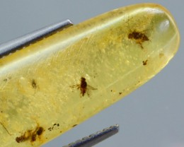 TOP Buggy Amber Copal Entire & undamaged bugs inclusions