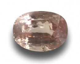 Natural Unheated Padparadscha |Loose Gemstone| Sri Lanka - New