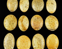Genuine 596.00 Cts Coral Fossil Oval Shape Cab Lot