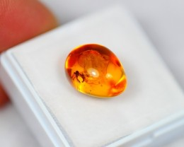 Lot 04 ~ 3.40Ct Natural Baltic Amber with Fossil Insect